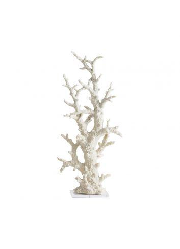Fósil Coral